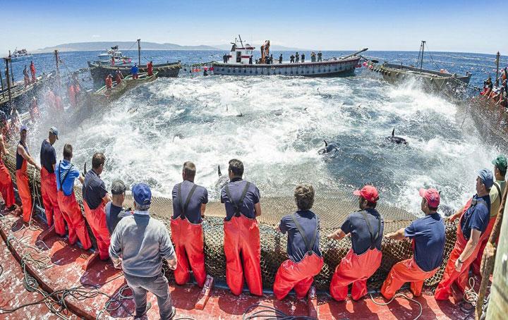 De eeuwenoude visserskunst la Almadraba