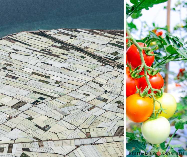 De kassen en tomaten van Almeria